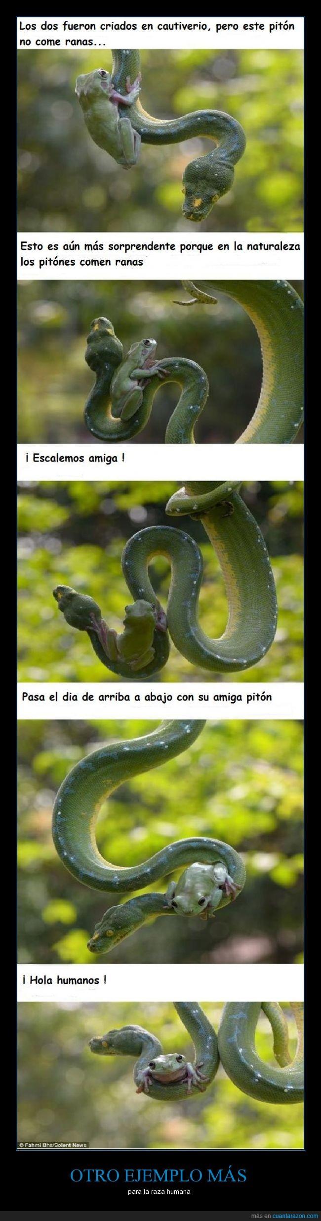 amistad,batracio,boa,convivir,culebra,pitón,rana,serpiente,víbora