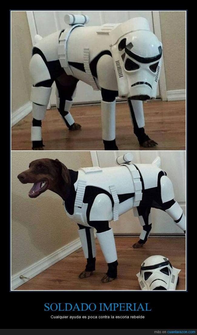 armadura,cosplay,imperial,perro,soldado