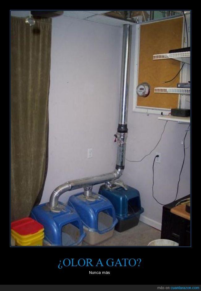 apeste,casa,extractor,gato,heder,olor,ventilar
