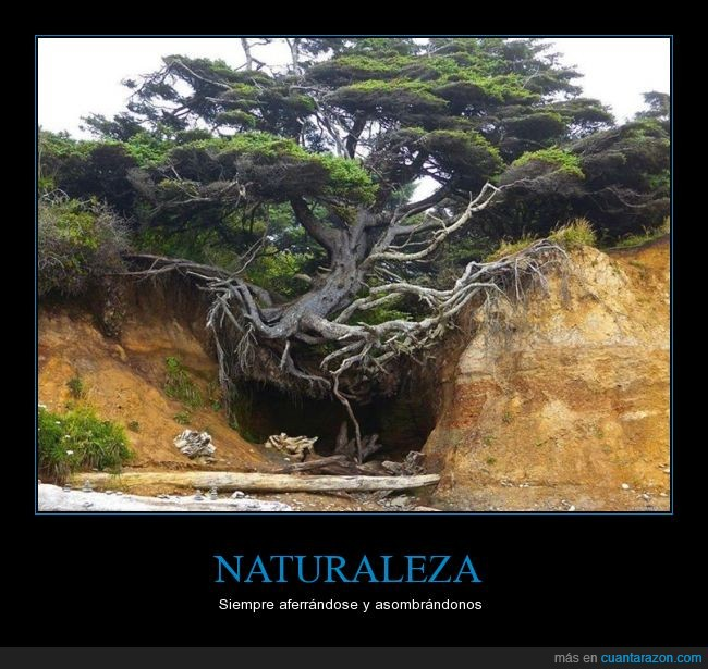 árbol,hermoso,naturaleza,raíces