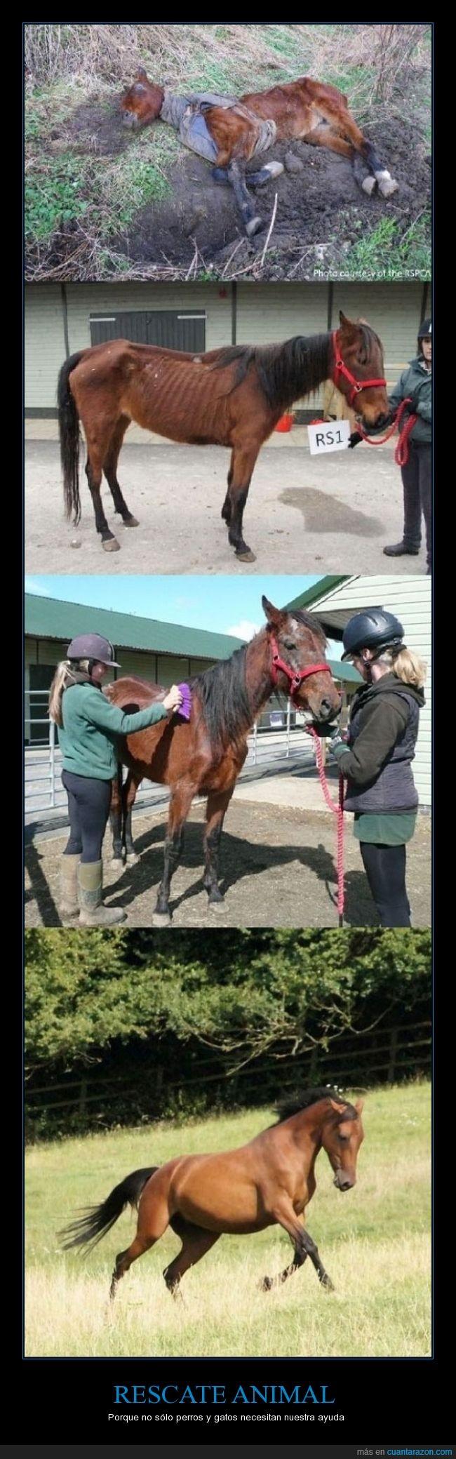caballo,corcel,humanidad,supervivencia