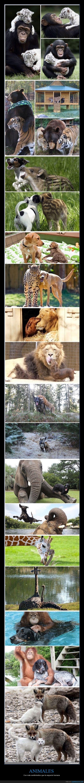 animales,especie,gatos,humana,jirafa,leon,perro,sentimientos,zorros
