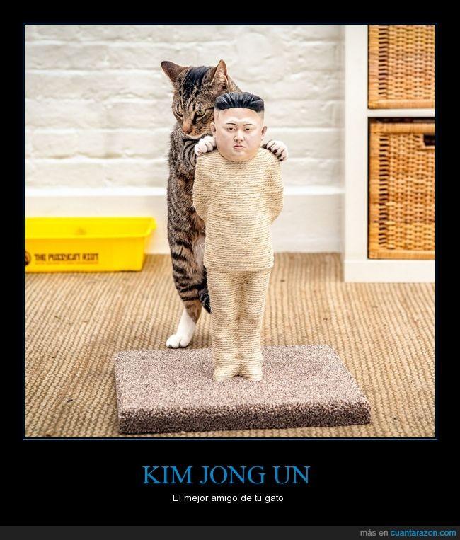 corea,gato,kim jong un,rascador