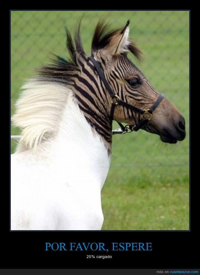 caballo,cargado,cebra,chop?,color,desteñido