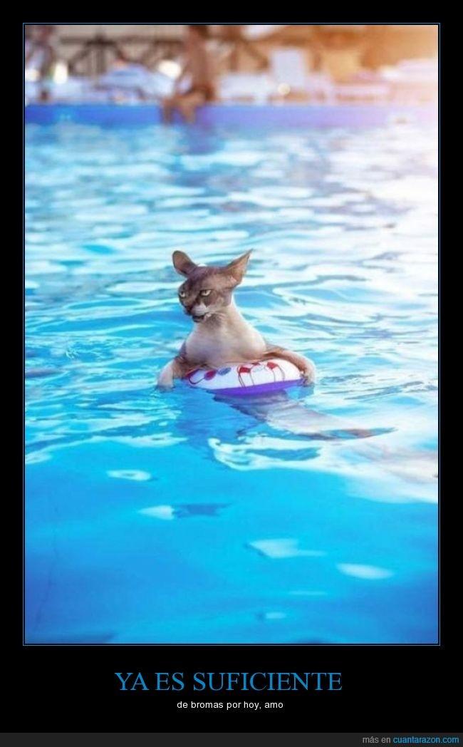 alberca,broma,felino,gato,nadar,piscina,salvavidas