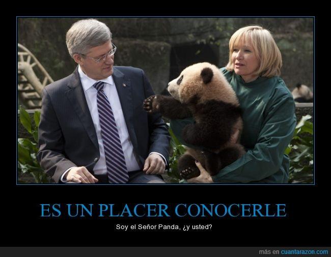 dar la mano,oso panda,panda,saludo,señor