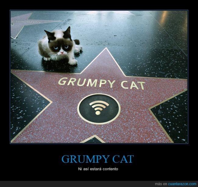 cat,famoso,gato,grumpy cat,paseo de la fama