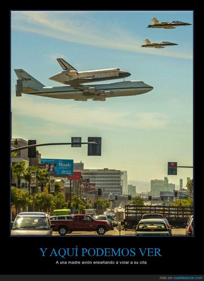 avion,aviones,cría,hijo,madre,volar
