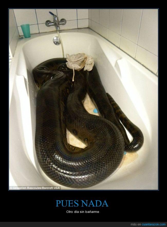 5 metros,anaconda,bañarse,bañera,ducha,otro dia mas,serpiente
