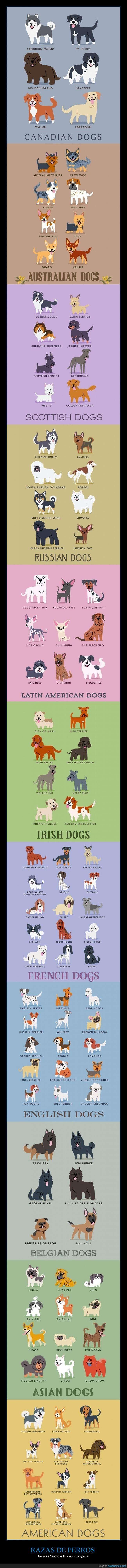 diferentes,especies,perros,razas,tipos