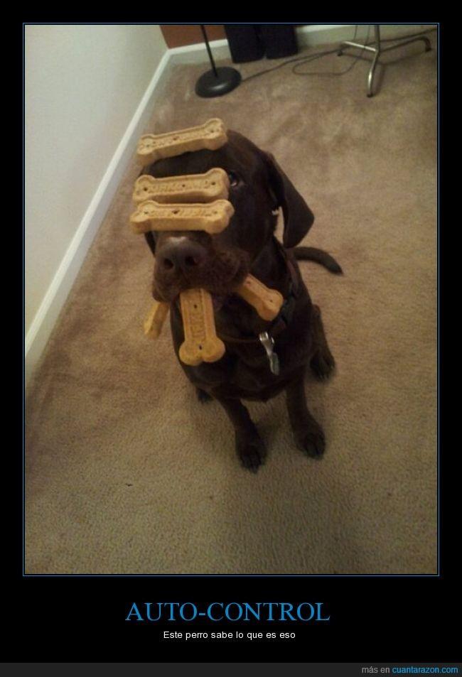 adiestramiento,aguantar,auto-control,autocontrol,entrenamiento,galleta,perro,premio,¿como pueden torturar así a un perrito?