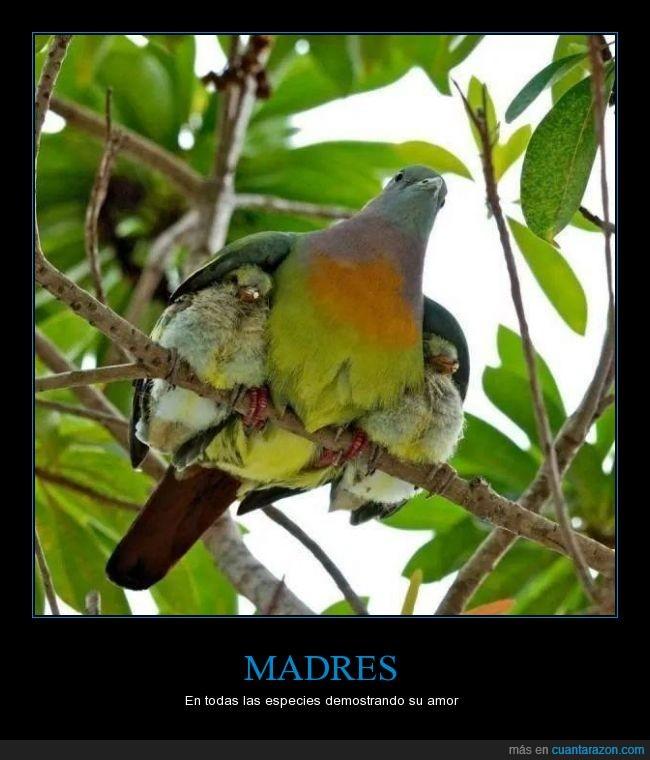 ala,amor,aves,debajo,madres,polluelos,tierno