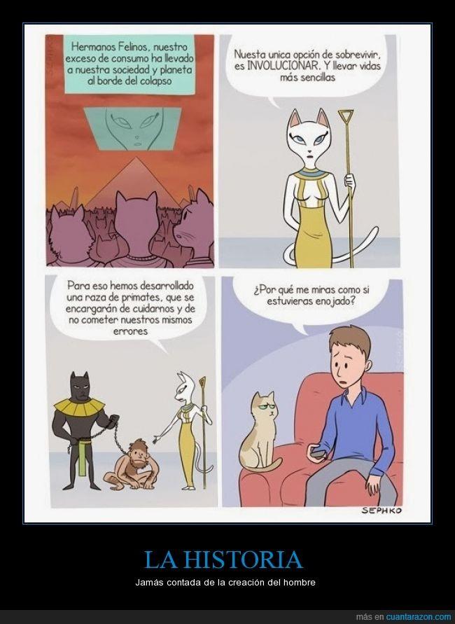 creación,gato,gatuno,humanidad,mirar,rencor