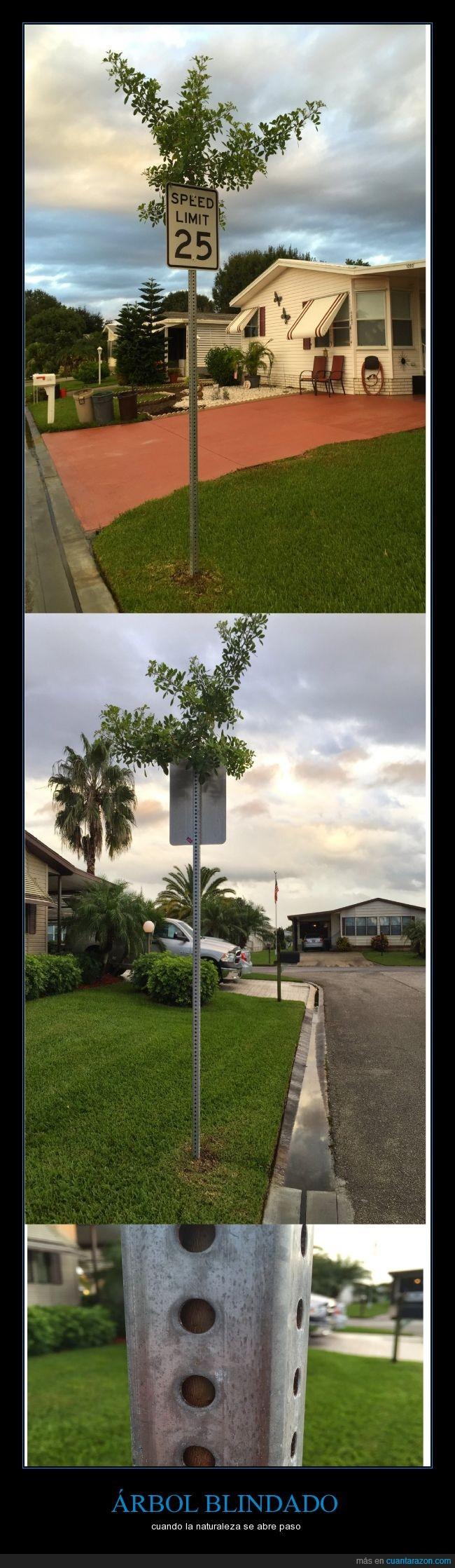árbol,atrapado,crecer,dentro,letrero,naturaleza,señalamiento de tráfico,subir