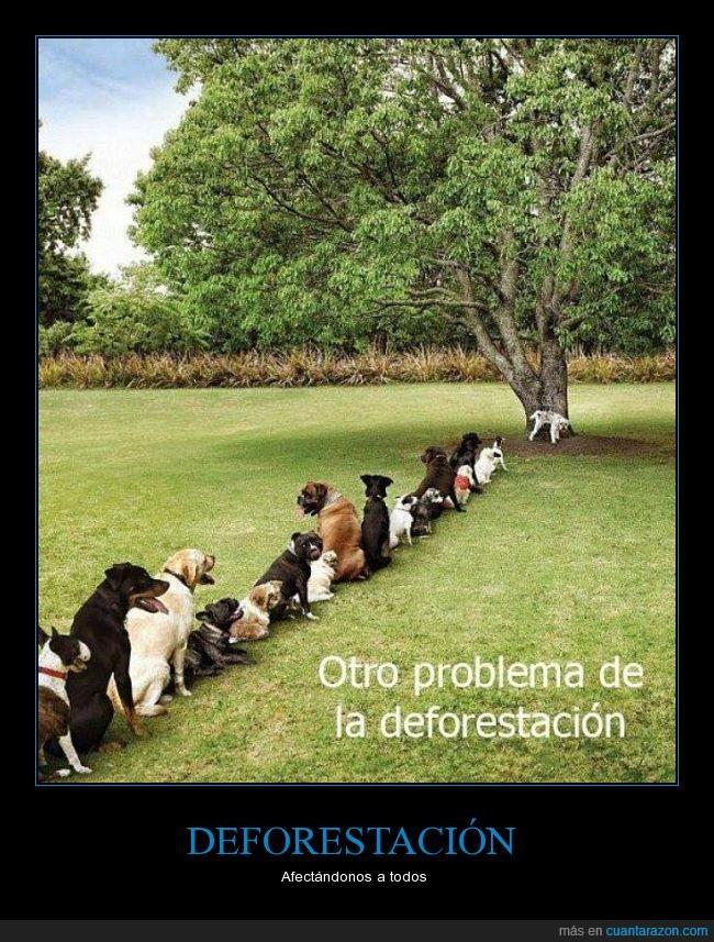 arboles,cola,debajo,deforestacion,esperar,fila,mear,miccion,perros