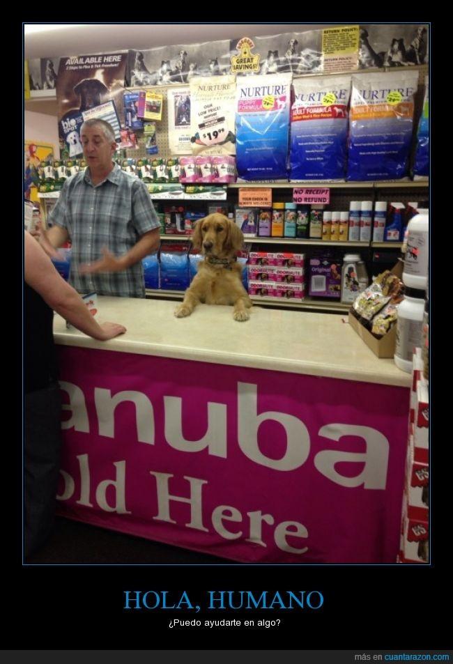 comida,dependiente,mascota,perro,tienda,vender
