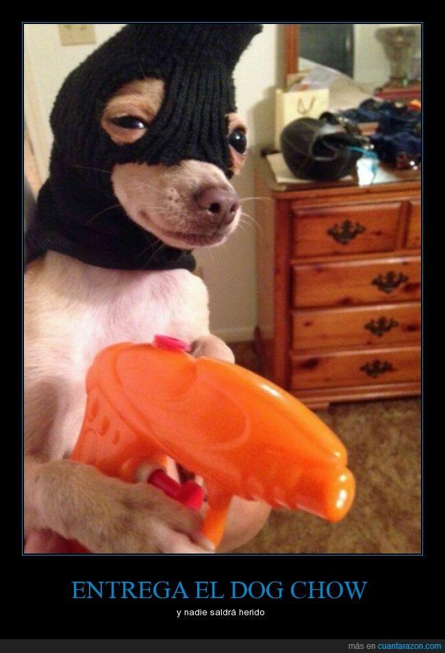 can,comida,humor,ladron,pasamontañas,perro amenaza,perros,pistola de agua