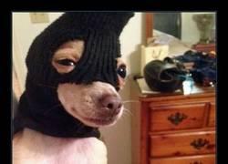 Enlace a ENTREGA EL DOG CHOW