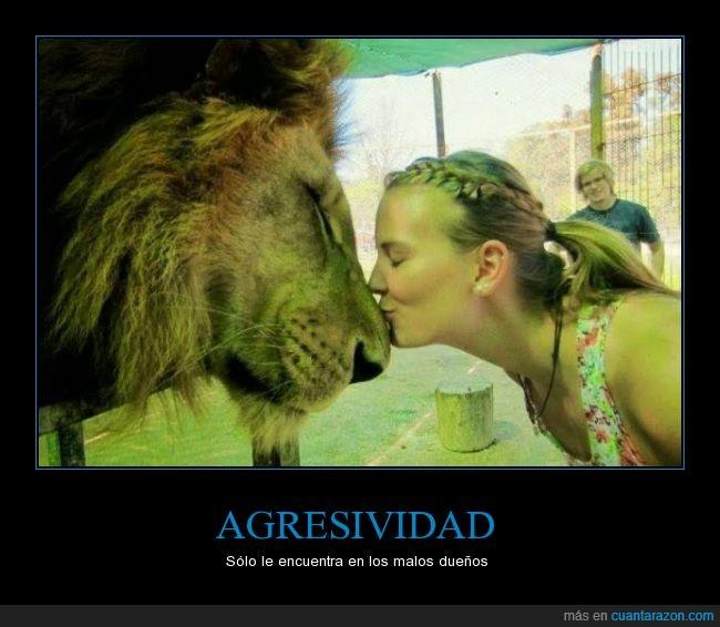 besar,beso,buenos dueños,cariño,chica,hocico,león,morro,no hay leones agresivos si no dueños agresivos