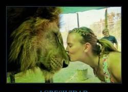 Enlace a No sé yo si con los leones se aplica, pero...