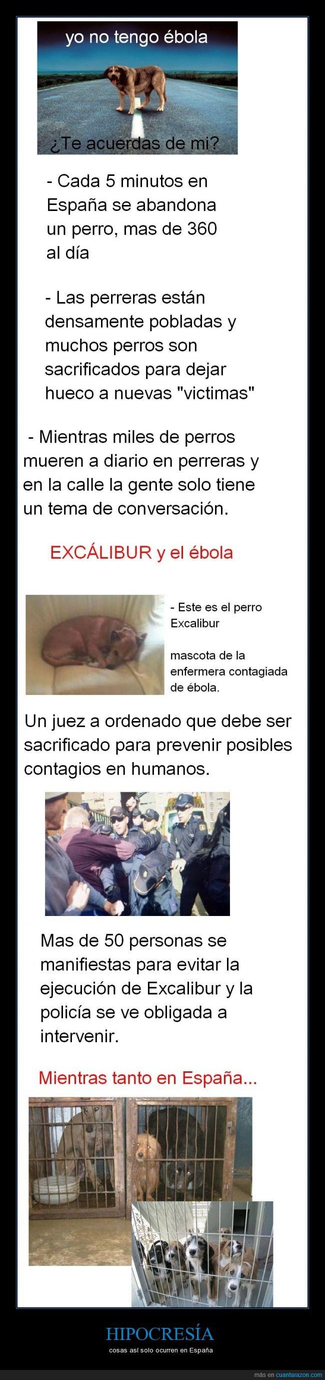 ébola,excalibur,falso,hipocresia,llanto,perrera,perro,sacrificar