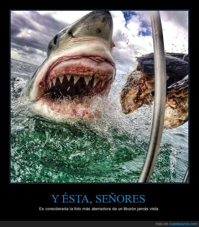 Amanda Brewer,Aterradora,Foto,Sudáfrica,Tiburón blanco