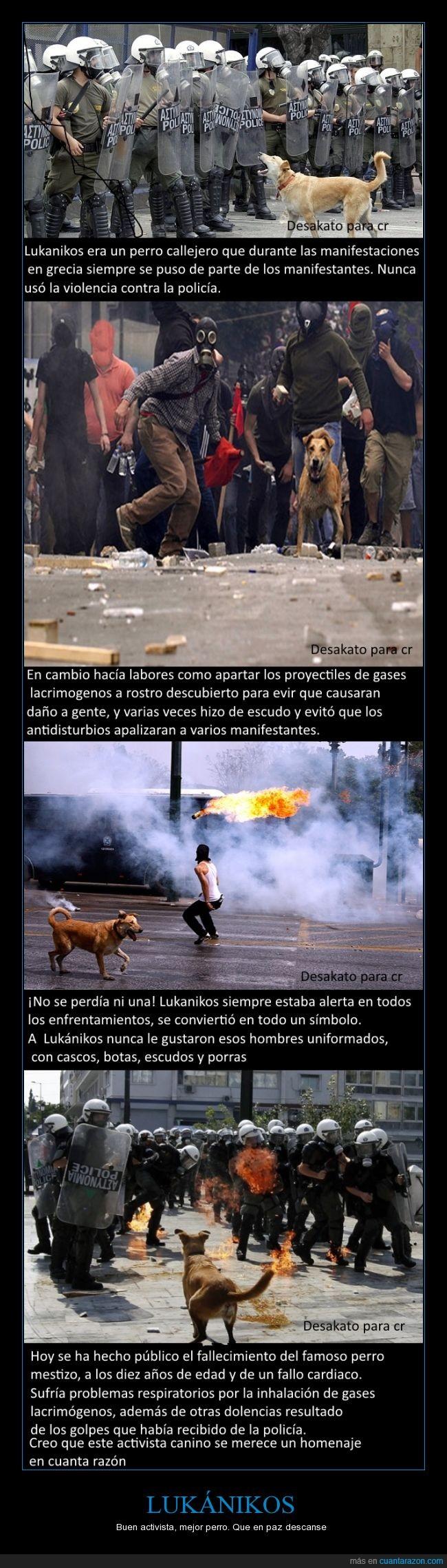 buen perro,disturbios,grecia,lukanikos,lukanikos=salchicha en griego,no le gustaban los polis,perro