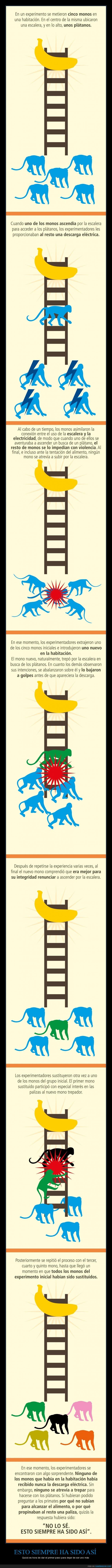 descargas,experimento,fábula,monos,primer paso,rebaño