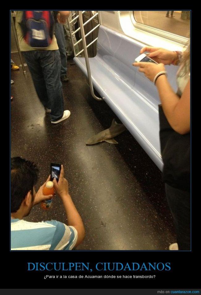 debajo,dentro,metro,pescado,rareza,subterráneo,tiburón