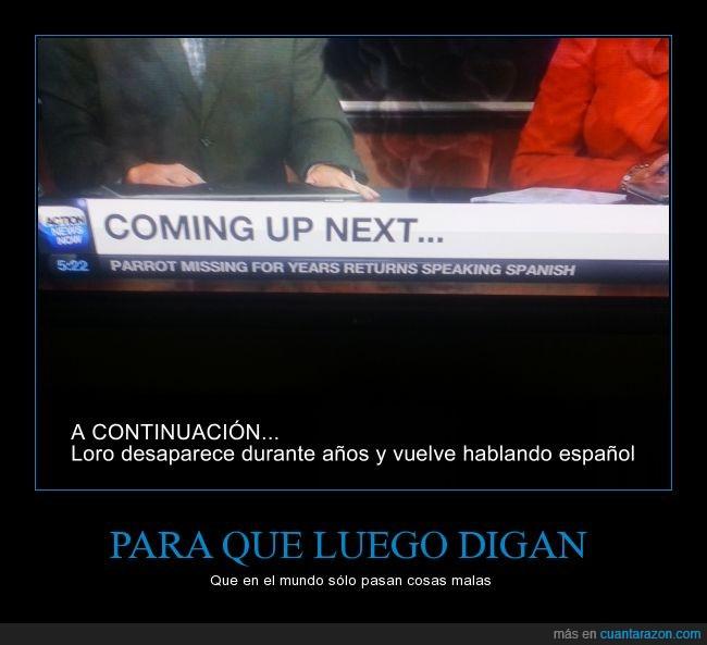 años,continuacion,desaparece,desaparecido,español,hablando,hablar,loro,noticias,telenoticias,titular,volver,vuelve