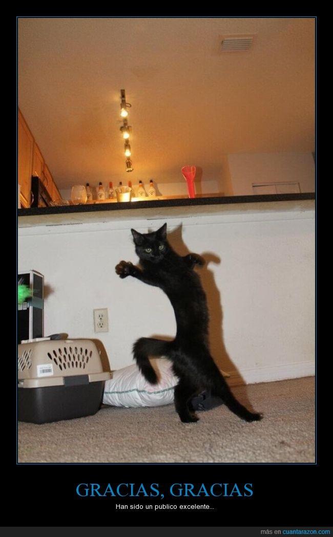 2 patas,el gato ha salido del edificio,excelente,gato,publico,¿longcat?