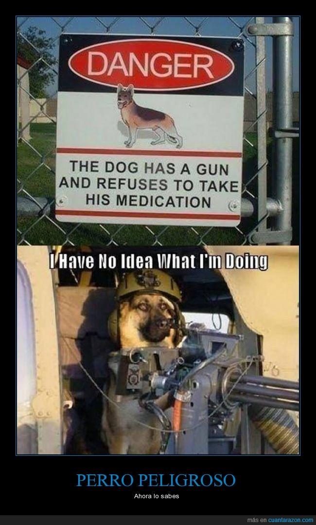 ametralladora,armado,armas,guardián,medicacion,miedo,peligroso,perro,seguridad
