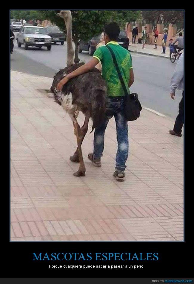 avestruz,calle,mascota,paseo
