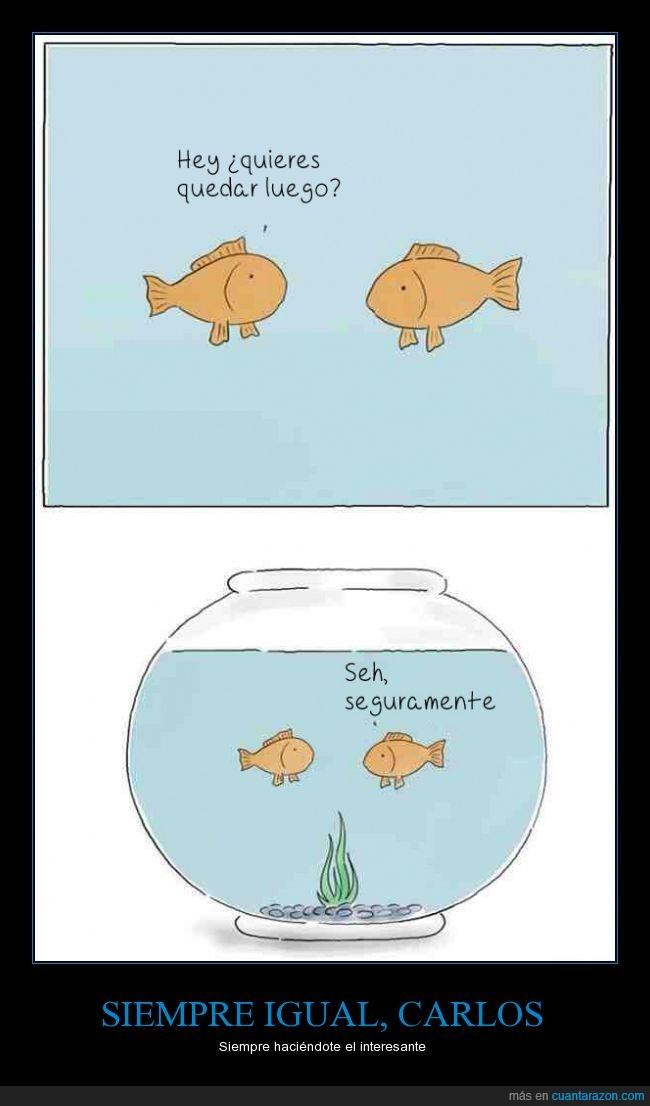 dos,luego,opcion,pecera,peces,pez,quedar,seguramente,unica