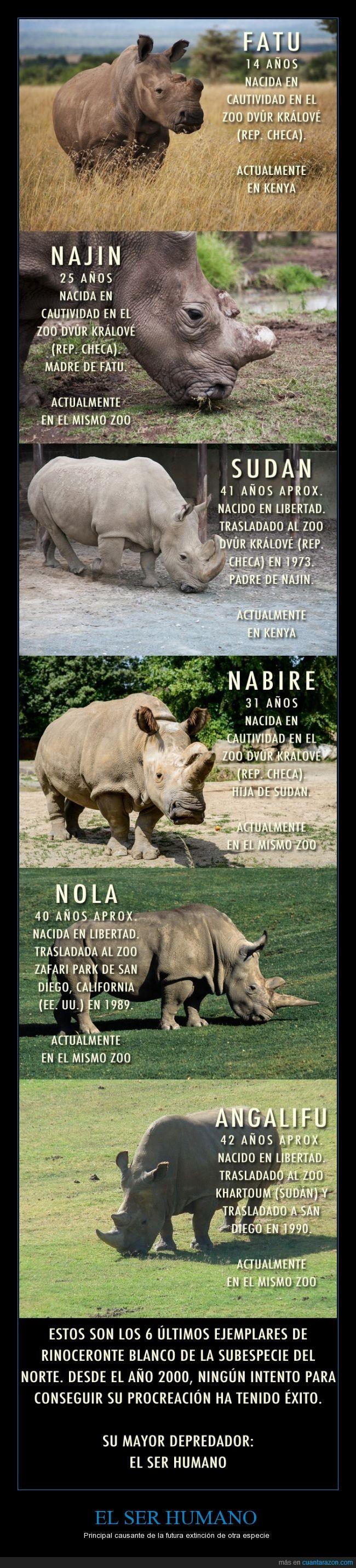 Animales,El Ser Humano,Kenya,Peligro de Extinción,Rinocerontes,Zoo