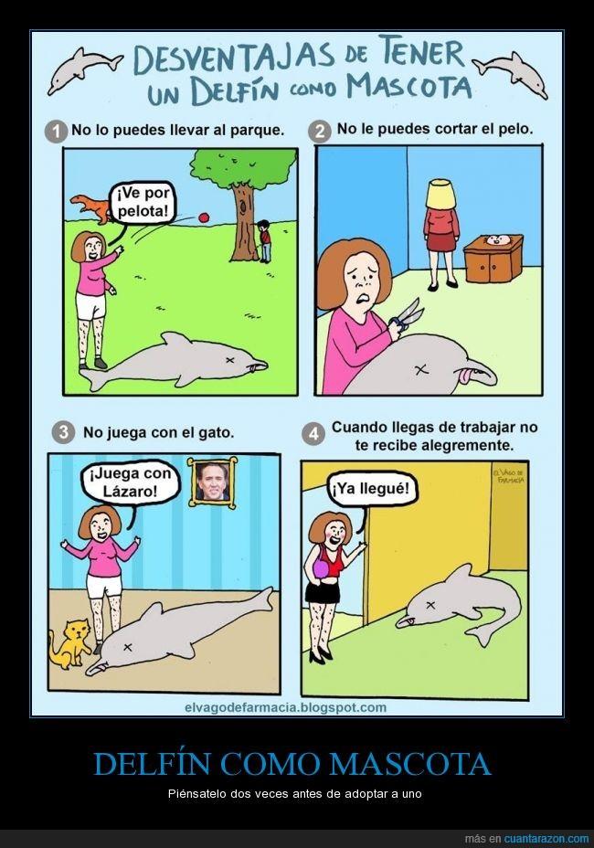 absurdo,bizarro,Delfin,locura,mascota,paseo,wtf