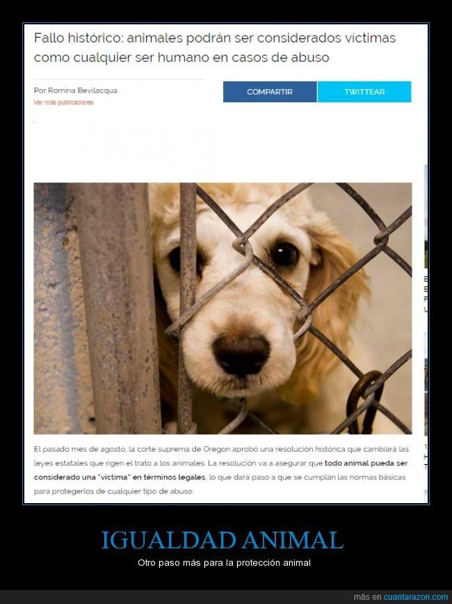 animal,animales,estados unidos americanos,igualdad,maltrato,oregon,protección animal,victima,violencia