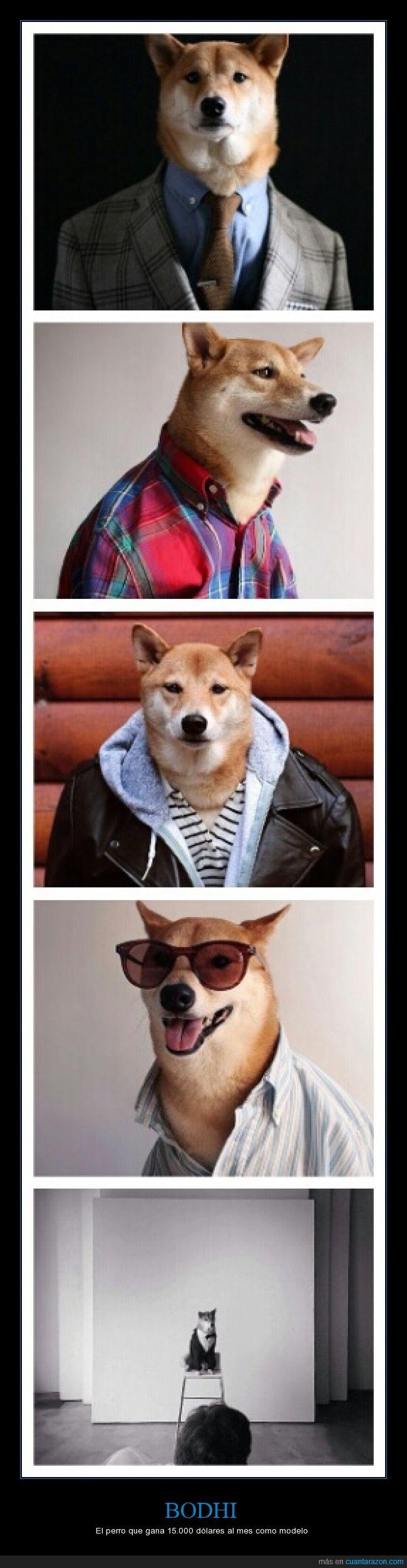 es un labrador retriever :),mi perro mola mas,modelo,Perro