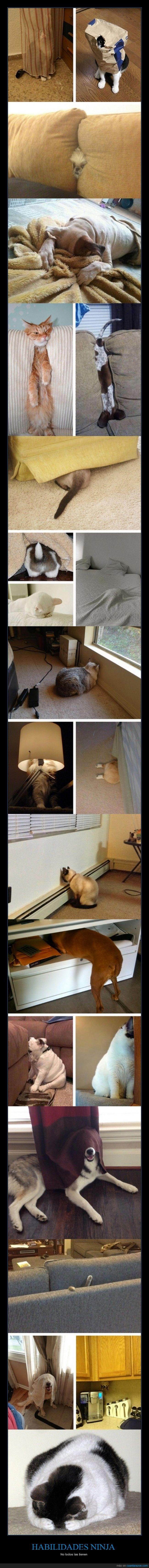 animales,divertidos,esconder,gatos,juego,ninja,perros