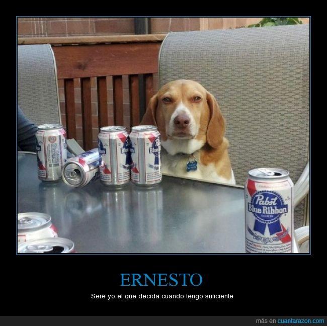 bever,cansado,cerveza,mandar,perro