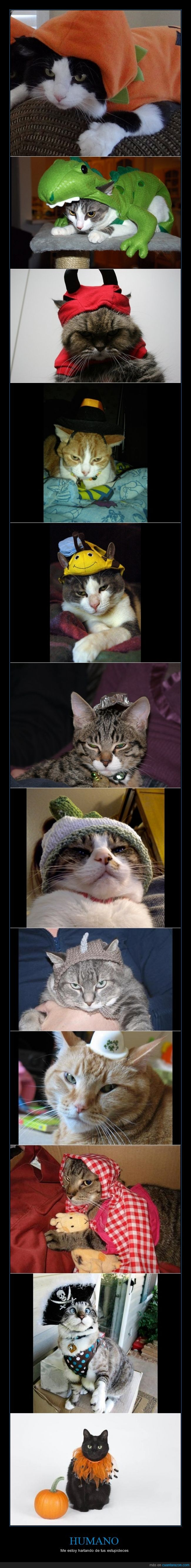 disfraces,Gatos,Halloween,mininos,molestos,odiar