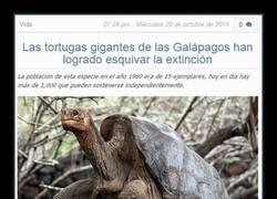 Enlace a La asombrosa recuperación de las tortugas de las Islas Galápagos