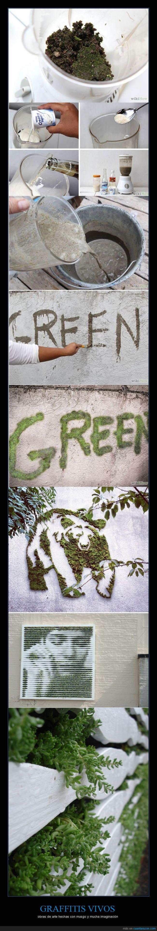 arte,graffiti,musgo,naturaleza,original,oso,planta,retrato,vivo