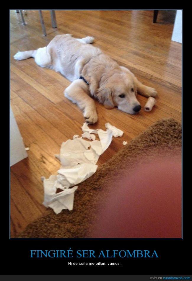 alfombra,disimular,fingir,higienico,modo,papel,Perro,romper,y luego culparé al gato