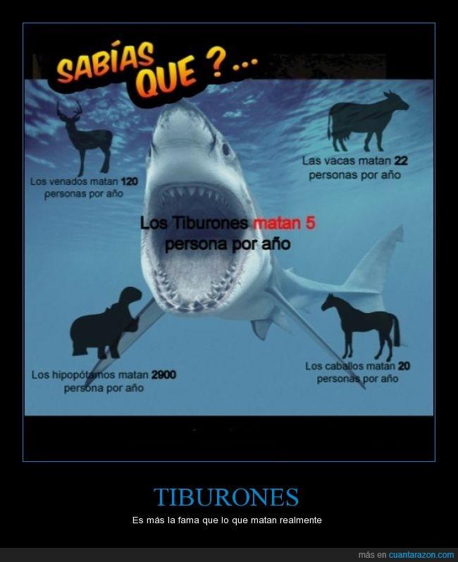 caballos,hipopotamos,matan,tiburones,venados