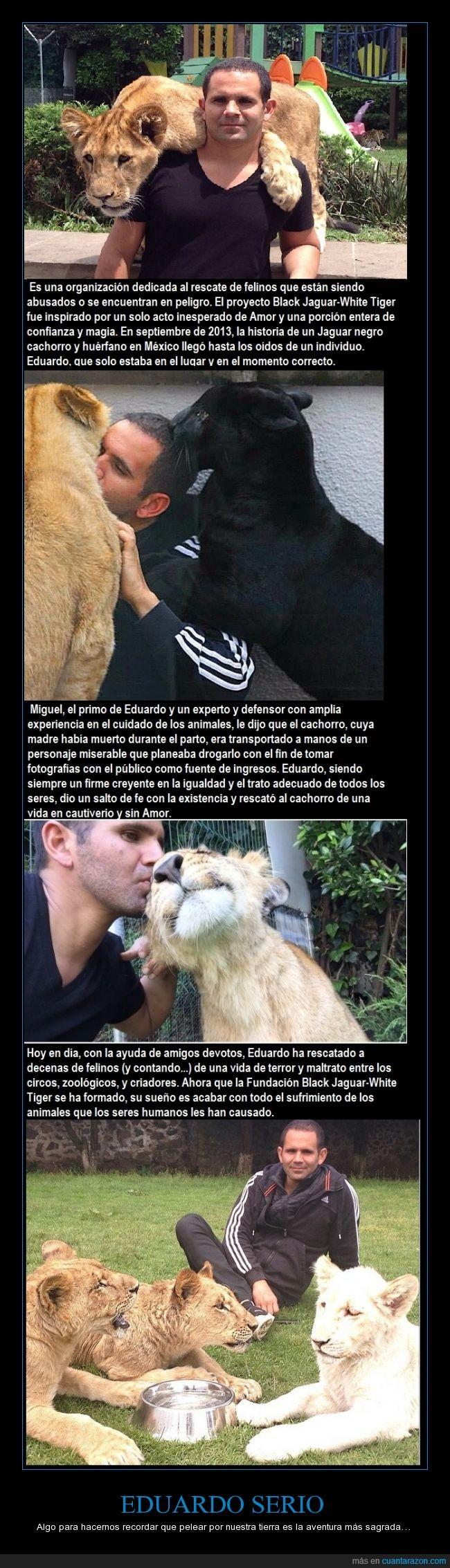 black,eduardo,foundation,jaguar,respect,serio,tiger,white