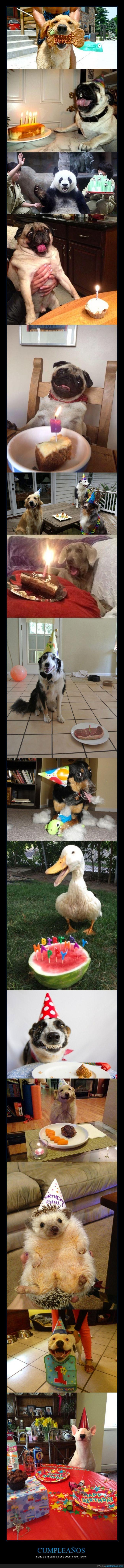 animal,cumpleaños,erizo,feliz,happy birthday,pastel,pato,perro,pug,tarta