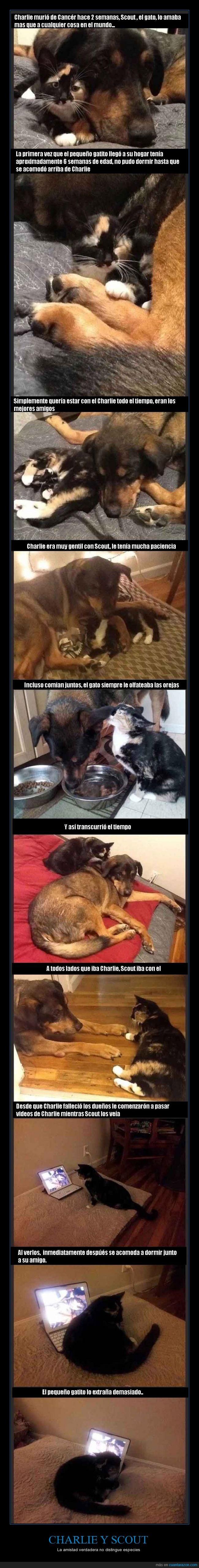 :(,amistad,conmovedor,gatos,mascotas,muerte,perro,scout,triste