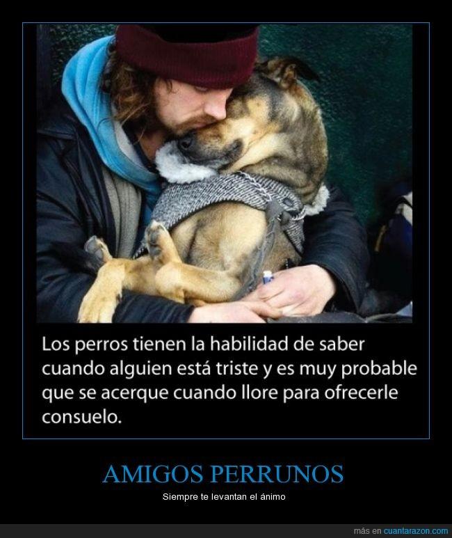 animar,ayudar,cuando estas triste,llorar,notar,Perros,sentir,tristeza