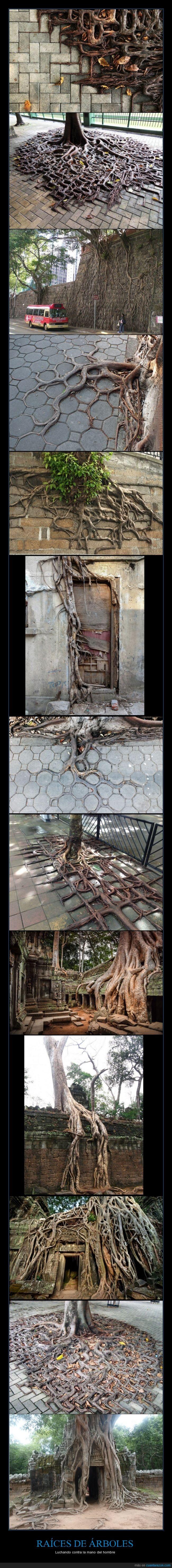 árboles,contra,del,hombre,luchando,mano,naturaleza,raíces